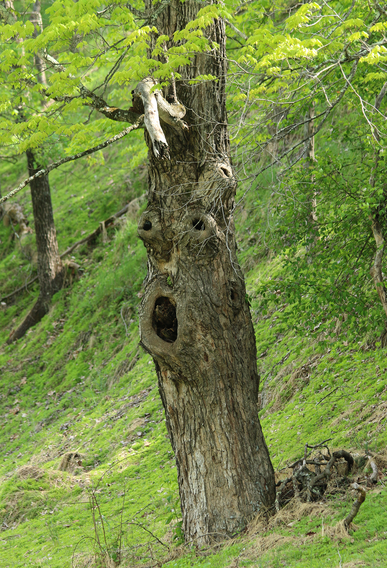 Fun Tree, West Virginia